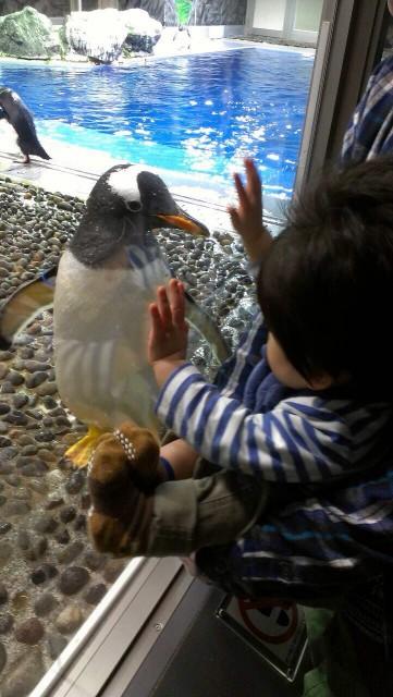 ☆松島水族館に行きました☆