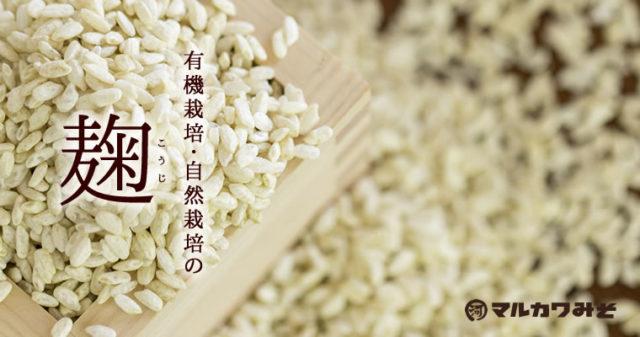 【米麹の作り方】みそ1級技能士が麹づくりのコツを徹底的に教えます|How to make Koji Rice